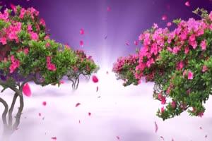 花瓣飞 巧影素材 竖版特效手机特效图片