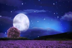 月亮星空薰衣草+誓言 背景素材 中秋节素材手机特效图片