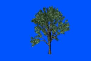 树生长 万物生长 热门特效2手机特效图片