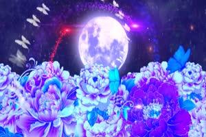 圆月牡丹有音效 背景素材 中秋节素材手机特效图片