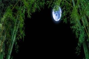 竹林月亮 背景素材 中秋节素材手机特效图片