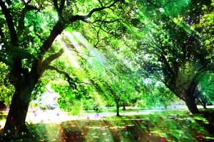 阳光树林 高清背景素材MP4 在线下载手机特效图片