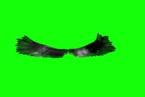 黑天鹅翅膀 抖音热门特效绿布和绿幕视频抠像素材
