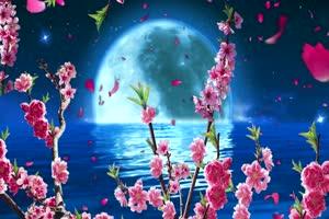 月亮花瓣湖水 背景素材 中秋节素材手机特效图片
