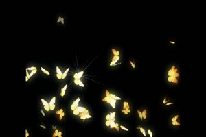 一群闪光蝶 蝴蝶 抠像素材绿布和绿幕视频抠像素材