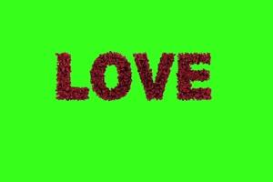 玫瑰花 爱心 Love 帝国设计绿布和绿幕视频抠像素材