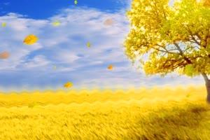 金色田野 大树 高清背景素材MP4 在线下载手机特效图片