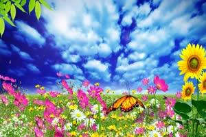 花园 高清背景素材MP4 在线下载手机特效图片