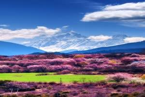 花海 远山巧影素材 竖版特效手机特效图片