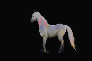 白马 神马 透明通道 抠像素材 alpha视频手机特效图片