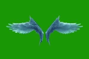 翅膀 天使翅膀 老鹰翅膀 绿屏抠像素材