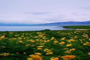 手机专用 花海 剪映唯美风景背景视频手机特效图片
