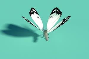白色蝴蝶一只 绿幕抠像 特效素材 @特效牛手机特效图片