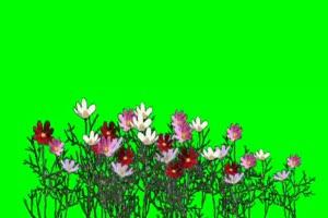 花 绿幕抠像 特效素材 @特效牛手机特效图片