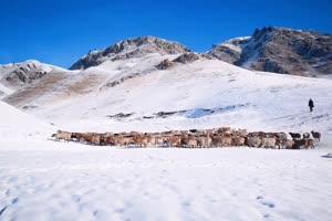 免费雪山 羊群  风景航拍 山水 山峰手机特效图片