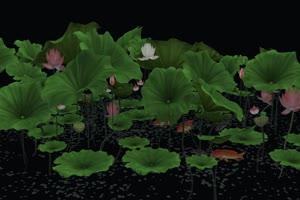 荷花花瓣落叶32 莲花 抠像素材 巧影素材 AE抠像手机特效图片