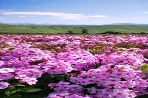 手机专用 花海世界2 剪映唯美风景背景视频手机特效图片
