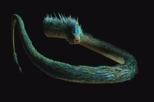 龙 龙鱼 飞天动物 绿幕抠像 特效视频 @特效牛手机特效图片