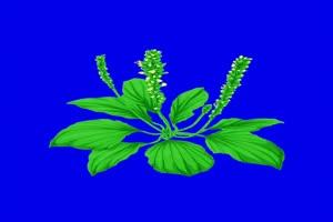 花草素材 巧影绿幕素材 古风素材手机特效图片