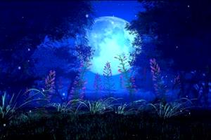 月色海面26 星空 月亮 夜晚 背景素材手机特效图片