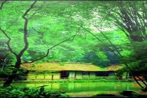 手机专用 唯美林中小屋 唯美风景视频背景素材手机特效图片