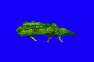 花素材 花枝素材 树素材 古风素材 巧影绿幕素材手机特效图片