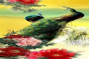 免费 手机专用 孔雀 美景视频素材86手机特效图片