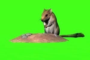 地鼠 老鼠 绿幕抠像 特效素材 @特效牛手机特效图片