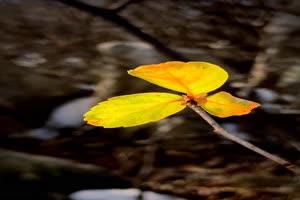 手机专用 三叶草 树叶 剪映唯美风景背景视频手机特效图片