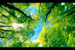唯美森林 梦幻森林 仙境 背景视频下载29手机特效图片