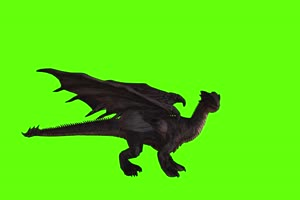 4K 黑色翼龙落地侧面 绿幕动物视频抠像视频素材手机特效图片
