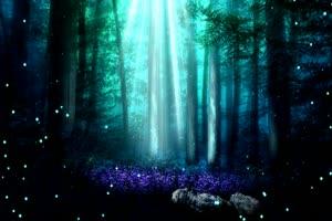 唯美森林 梦幻森林 仙境