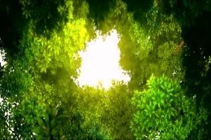 唯美森林 梦幻森林 仙境 背景视频下载40手机特效图片