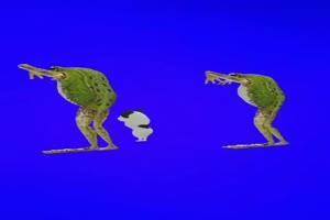 青蛙跳舞 绿屏抠像素材绿布和绿幕视频抠像素材