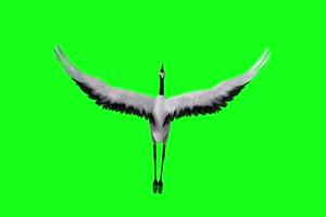 免费坐骑 仙鹤 飞鹤 飞鸟 白鹤 绿幕素材 绿幕视手机特效图片