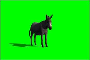 驴 笨驴 绿屏抠像 特效素