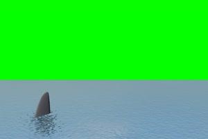 鲨鱼 游来游去 6绿屏素材