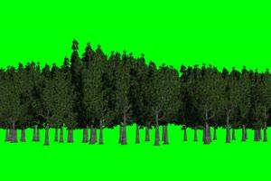 树林 树 绿屏素材 绿幕素材 巧影特效手机特效图片