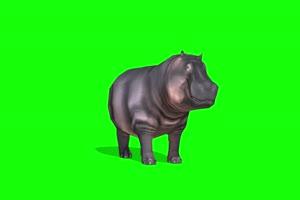 河马1 动物绿屏 绿幕视频 抠像素材下载手机特效图片