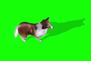 狗上面 绿幕视频 绿幕素材 剪映抠像素材手机特效图片
