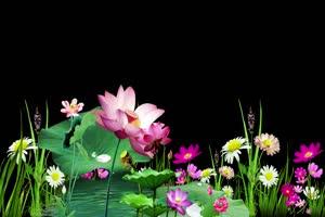 荷花水草 抠像素材 巧影素材手机特效图片