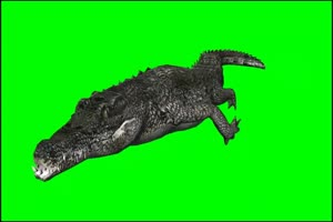鳄鱼 3 绿屏抠像 特效素材 免费下载手机特效图片