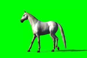 阿拉伯 白马 10 绿屏抠像 特效素材 免费下载手机特效图片