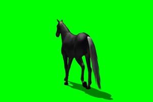 黑马 3 绿屏抠像 特效素材 免费下载手机特效图片