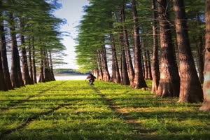 手机专用 树林美景2 剪映唯美风景背景视频手机特效图片