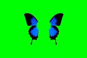 蝴蝶 16 绿屏抠像 巧影AE 特效素材 电影精灵[Tex