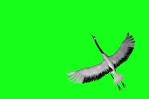 仙鹤 飞鹤 飞鸟 白鹤 绿幕素材 绿幕视频 @特效牛手机特效图片