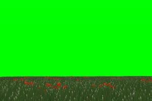 草原 花园 草坪 绿屏素材 绿幕输出 巧影特效手机特效图片