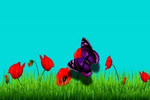 蝴蝶 17 绿屏抠像 巧影AE 特效素材 电影精灵[Tex