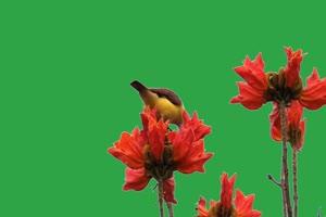 花儿小鸟绿幕视频素材 动物绿幕 剪映特效素材手机特效图片